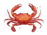 Crab Cameo I Art Print