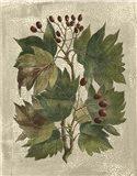 Printed Deshayes Trees I Art Print
