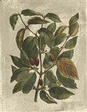 Printed Deshayes Trees II Art Print