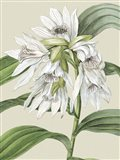Small Orchid Blooms III (P) Art Print