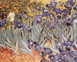 Irises in the Garden, Saint-Remy, c.1889 Art Print