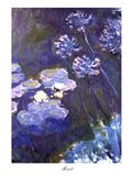 Water Lilies and Agapanthus, 1914-1917 Art Print