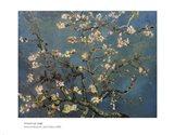 Blossoming Almond Tree, Saint-Remy, c.1890 Art Print