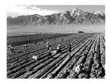 Farm Workers and Mt. Williamson Art Print