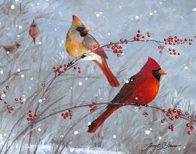 Winter Cardinals Art Print by Stever