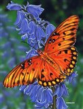 Brilliant Eye Jewel Butterfly Art Print