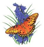 Brilliant Eye Jewel Butterfly-II Art Print