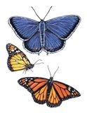Eastern Blue & Monarch Butterfly Art Print