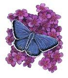 Eastern Tailed Blue Butterfly-II Art Print
