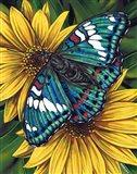 Gaudy Baron Butterfly Art Print