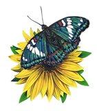 Gaudy Baron Butterfly-II Art Print