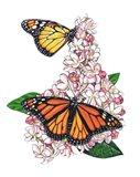 Monarch Butterfly-II Art Print