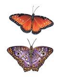 Queen And White Peacock Butterflies Art Print