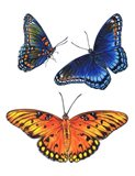 Red Spotted Purple And Brilliant Eye Jewel Butterflies Art Print