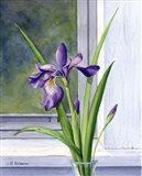 Blue Flag-Wild Iris Art Print