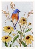 Bluebird And Blackeyed Susans Art Print