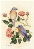 Bluebird I Art Print