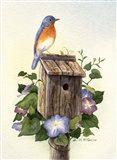 Bluebird III Art Print