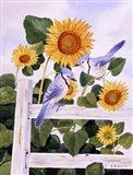 Bluejays And Sunflowers Art Print