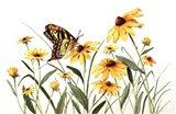 Butterfly & Black Eyed Susans Art Print