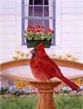 Cardinal And Geraniums Art Print