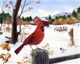 Cardinal Mornings Art Print