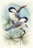 Chickadee Vignette Art Print