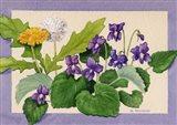 Dandelion And Violets Art Print