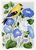 Goldfinch And Morning Glories Art Print