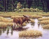 Lone Bull Art Print