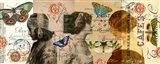 Butterfly Beauties Art Print