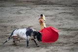 Matador and a bull in a bullring, Lima, Peru Art Print