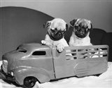 Pug Puppies Sitting In Back Of Toy Truck Art Print
