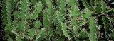 Close-Up Of Cactus Plants, Botanical Gardens Of Buffalo, New York Art Print