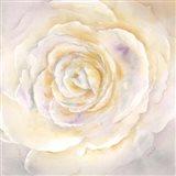 Watercolor Rose Closeup I Art Print
