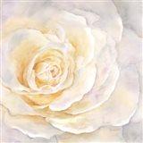 Watercolor Rose Closeup II Art Print