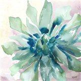 Succulent Watercolor III Art Print