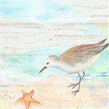 Sandpiper Beach II Art Print