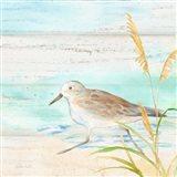 Sandpiper Beach IV Art Print