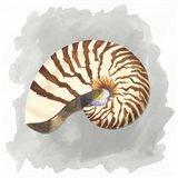 Shells on Grey III Art Print