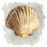 Shells on Grey V Art Print