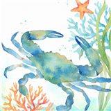 Sea Life Serenade II Art Print