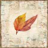 Nature Walk Leaves I Art Print