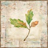Nature Walk Leaves II Art Print