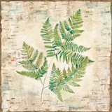 Birch Bark Ferns I Art Print