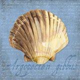 Oceanum Shells Blue V Art Print