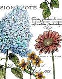 Botanical Postcard Color I Art Print
