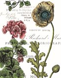 Botanical Postcard Color III Art Print