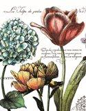 Botanical Postcard Color IV Art Print