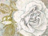 White Rose Blossom Art Print